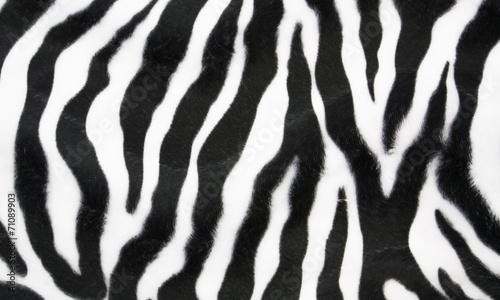 Zebra texture #71089903