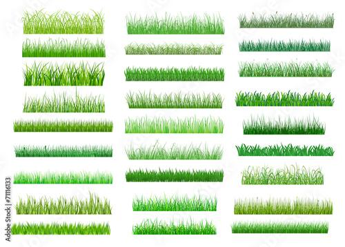 Fototapeta Fresh green spring grass borders