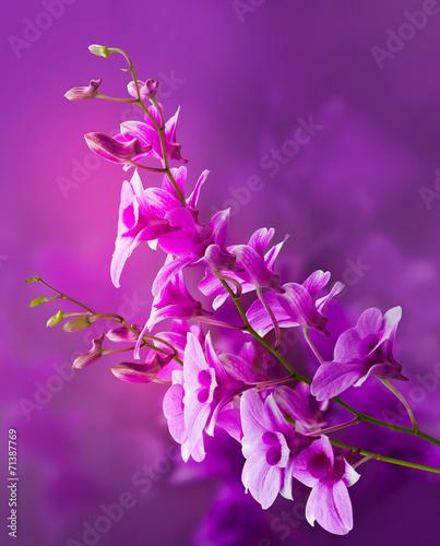 Canvas Print Colorful purple orchids, flower vibrant concept