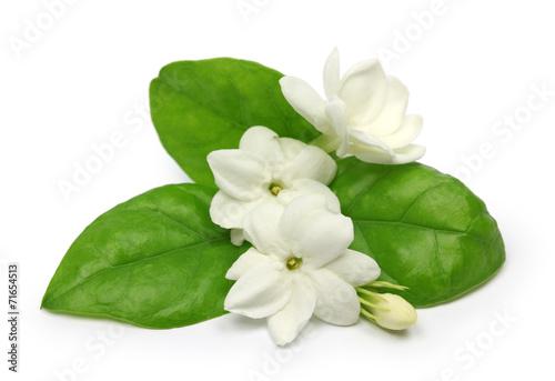 Fototapeta arabian jasmine,  jasmine tea flower
