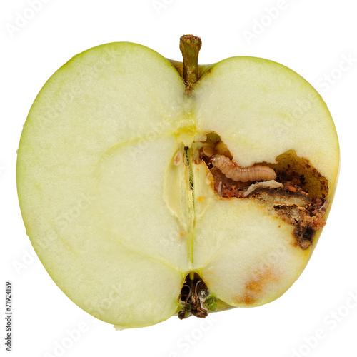 Worm Eating Apple Isolated on White Background