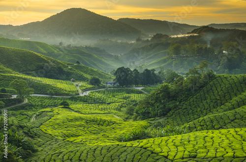 Photo Tea plantation Cameron highlands, Malaysia