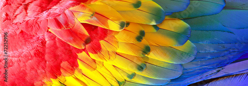 Fotografia Parrot feathers, red, yellow and blue exotic texture