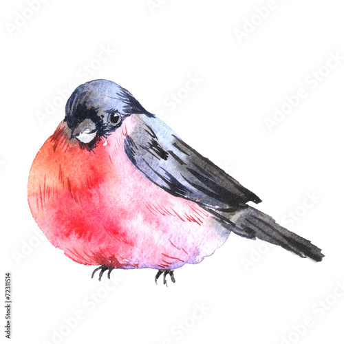 Leinwand Poster Winter Watercolor background with bullfinches