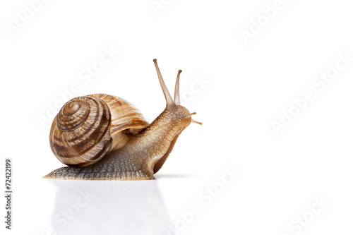 snail on the white background