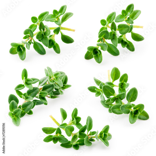 Thyme isolated on white background. Collection