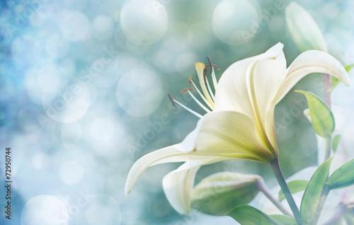 Fotografia lily flowers