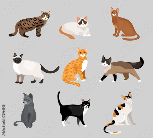 Fotografia Set of cute cartoon kitties or cats