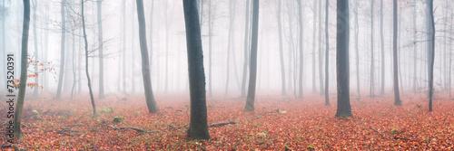 Herbstwald Panorama #73520391