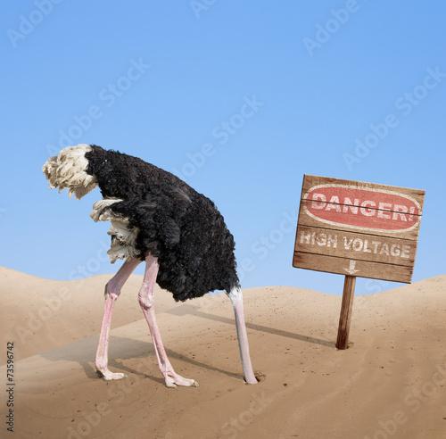 scared ostrich burying head in sand under danger sign