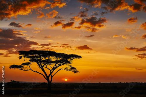 Fototapeta premium Afrykański zachód słońca