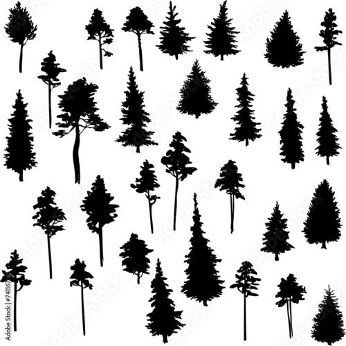 Fotografía set of conifer trees