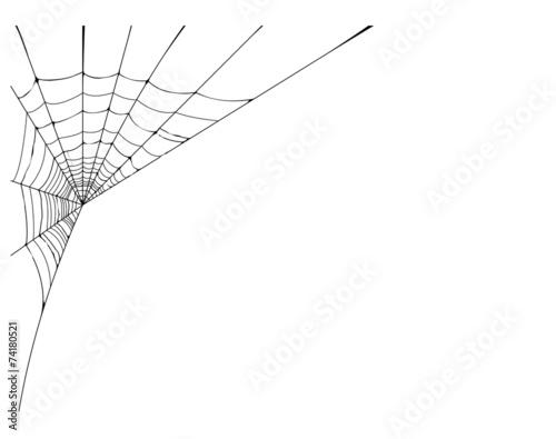Fotografia spider web detailed