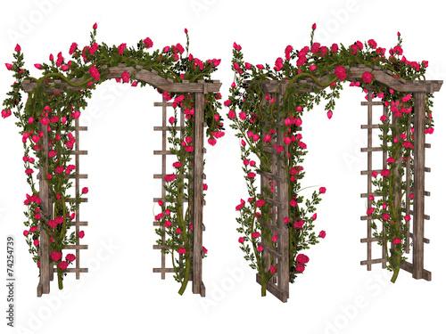 Fotografia, Obraz Romantic arbor with  pink  roses