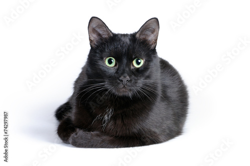 Stampa su Tela Black cat lying on a white background, looking at camera
