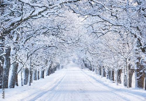 Fototapeta Leśna aleja w śnieżny poranek ścienna