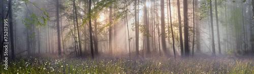 Fotografía Magic Carpathian forest at dawn