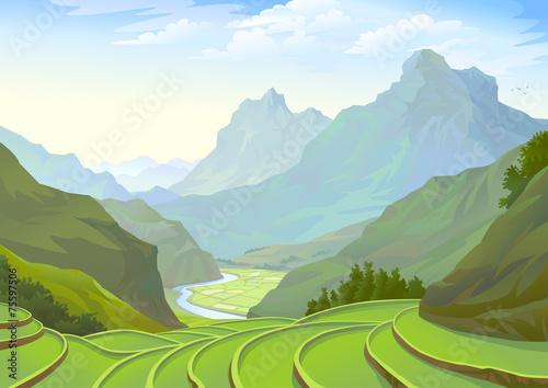Fototapeta Beautiful plantation fields in a spectacular valley