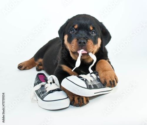 Fotografie, Obraz My Shoes!