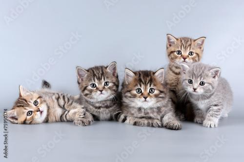 Fototapeta five kittens