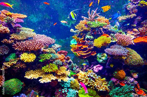 Obraz na płótnie Singapore aquarium