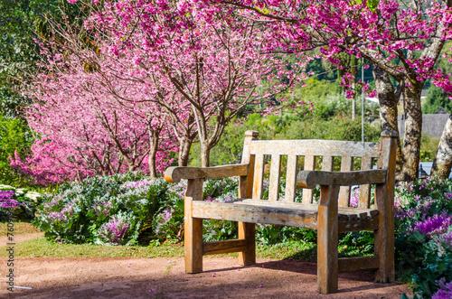 Wood bench with Sakura blossom background