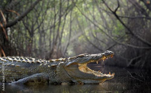 Wallpaper Mural Crocodile