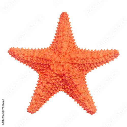 Fotografie, Obraz Caribbean starfish isolated on white background.