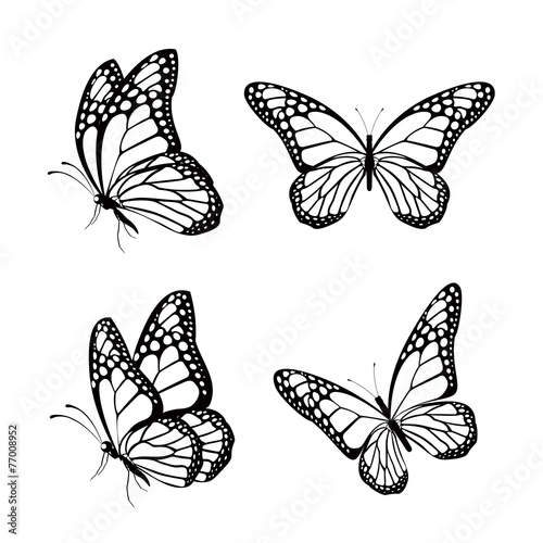 Carta da parati Set of Realistic Colorful Butterflies Isolated for Spring
