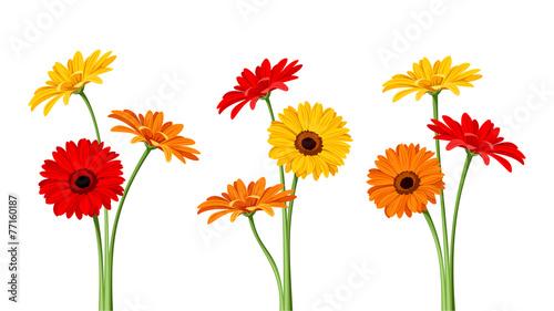Obraz na plátně Gerbera flowers. Vector illustration.