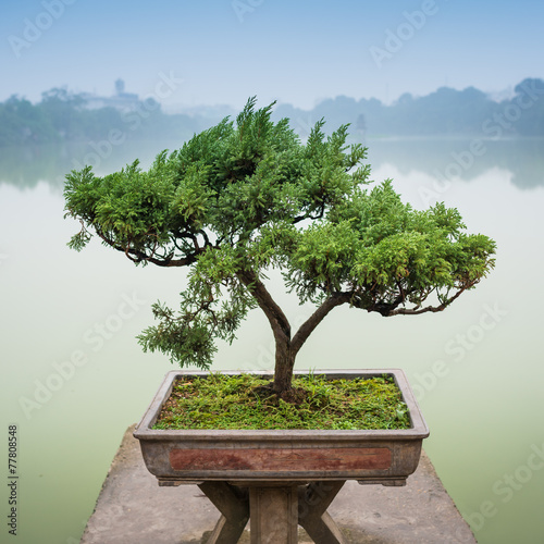 Japanese bonsai tree in pot at zen garden Bonsai is a Japanese art form using trees grown in containers