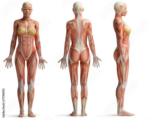 Foto female anatomy