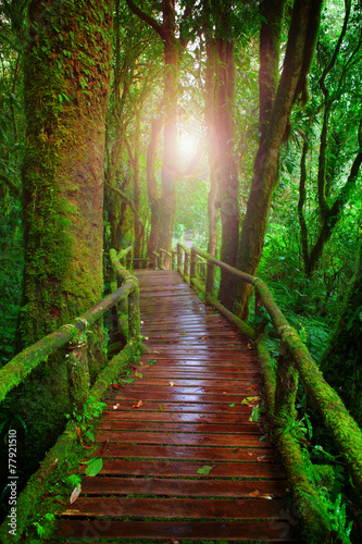 wood ways in mountain rain forest Doi Inthanont National Park Ch