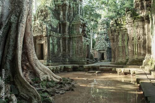 Ruiny Ta Prom świątynia, Siem Przeprowadzają żniwa, Kambodża. Fototapeta