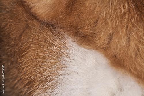 cat hair Tapéta, Fotótapéta
