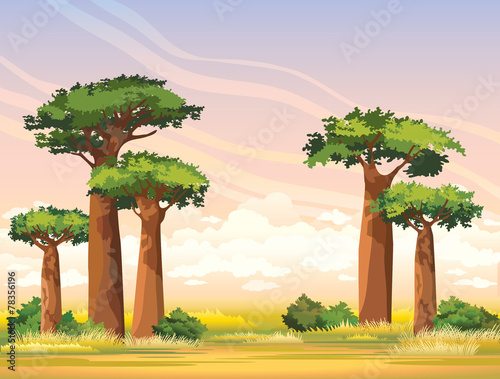 Foto African landscape with baobabs. Madagascar.