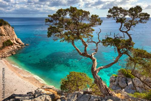 Alter Baum - Sardinien Fototapete