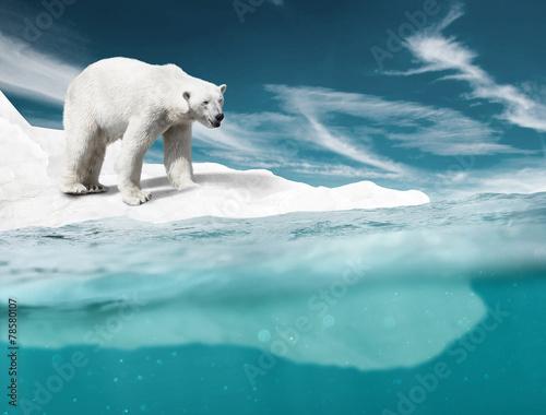 Fototapeta Polar Bear