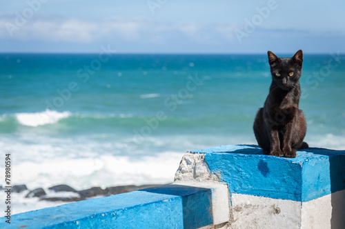 Leinwand Poster Portuguese Black cat, Praia das Macas