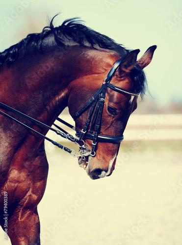 Portrait of a sports horse. Fototapet