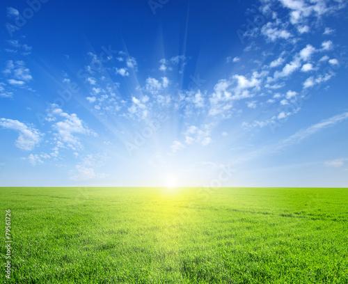 field and sun