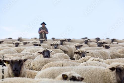Fotografia Schäfer und Herde
