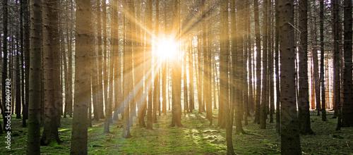 Sonne im Wald #79807782