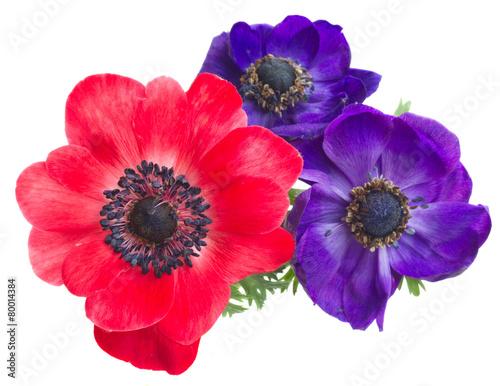 Fotografía anemone flowers