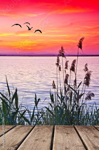 naturaleza y vida en el lago