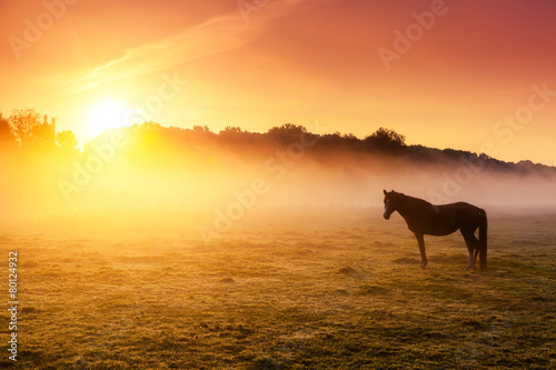 Fototapeta premium konie pasące się na pastwisku