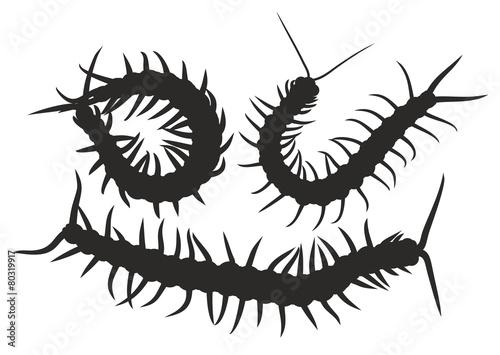 Tablou Canvas Dangerous insect