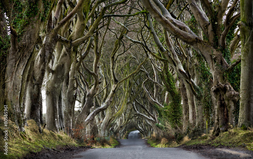 Canvas Print Dark Hedges, Northern Ireland