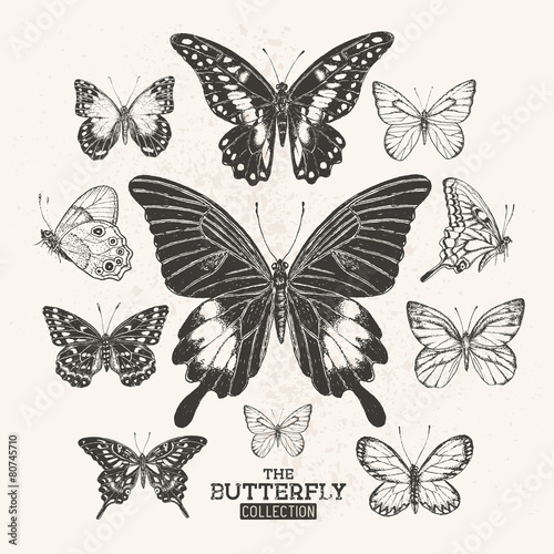 The Vintage Butterfly Collection #80745710
