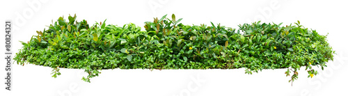 Fotografering Green shrub